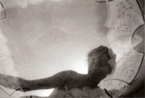 at the edge of the looking glass 2007 lambda print auf fotopapier........... der reizende raum......